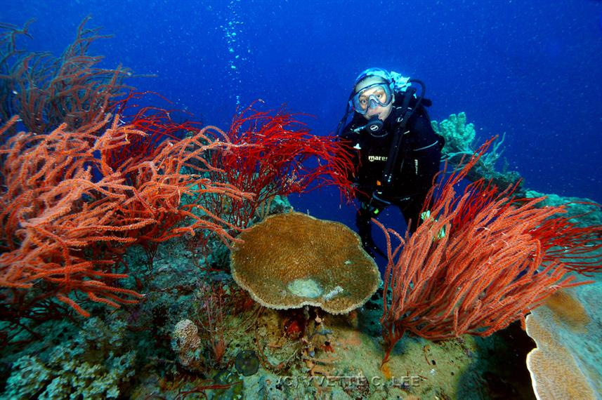 discovery corals